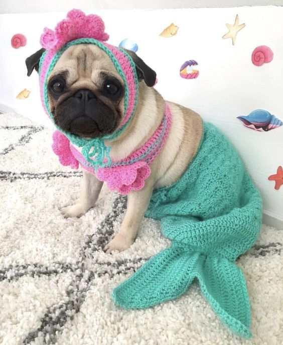 Perro disfrazado de sirena