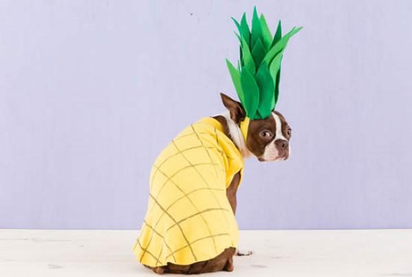 Perro disfrazado de piña
