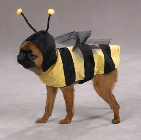 Perro disfrazado de abeja