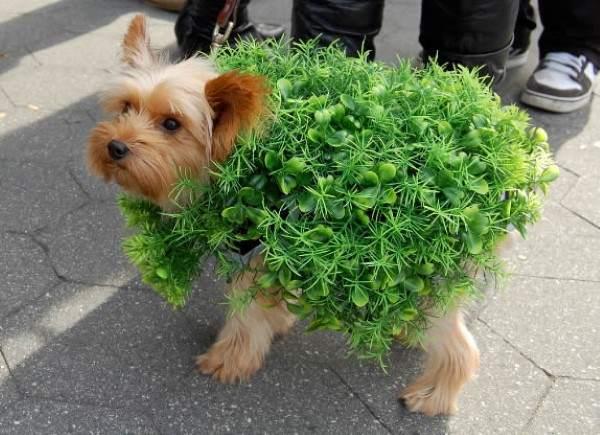 Perro vestido de bush