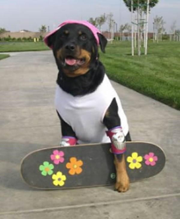Perro disfrazado de patinador