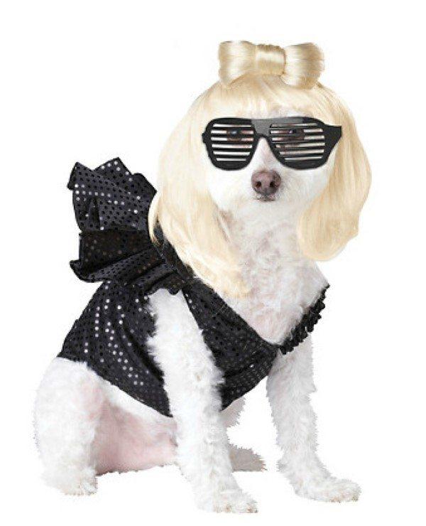 Perro con disfraz de Lady Gaga