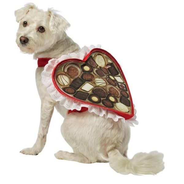 Disfraz de perro con caja de chocolate