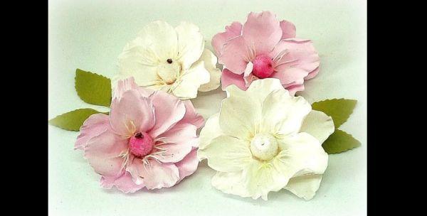 delicada flor de eva